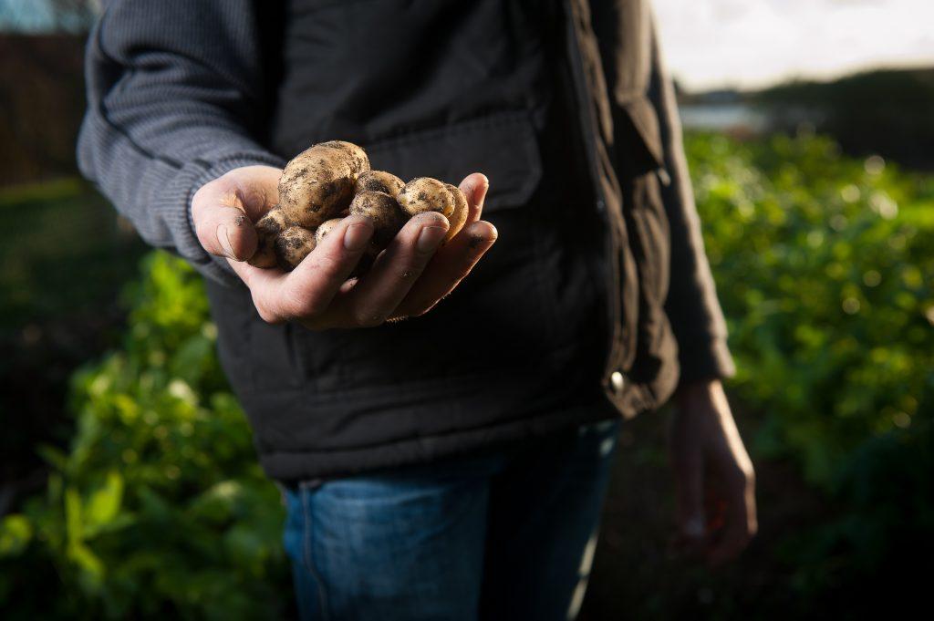 mba em agronegócio, MBA em Agronegócio é especialização inédita na região sul